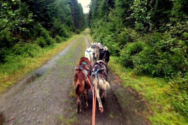 Hundene fikk dessverre ikke bringebærkake, men en fin tur! Foto Lise von Krogh