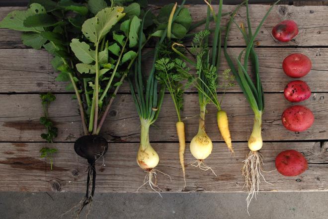 poteten sammen med sunne, norske grønnsaker er de viktigste ingrediensene i suppen. Foto: Lise von Krogh