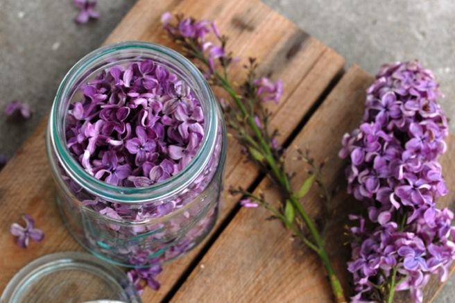 Fyll opp et ½ liter glass med syrinblader. Foto: Lise von Krogh.