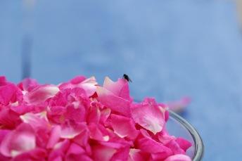Rosafargen overføres til geleen. Foto: Lise von Krogh.