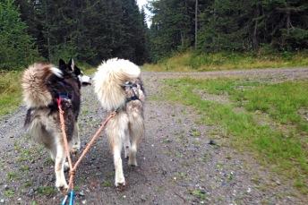 Solo og Kamille drar i vei. Foto: Lise von Krogh.