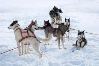 Gjengen tar seg en hvil. Foto: Lise von Krogh