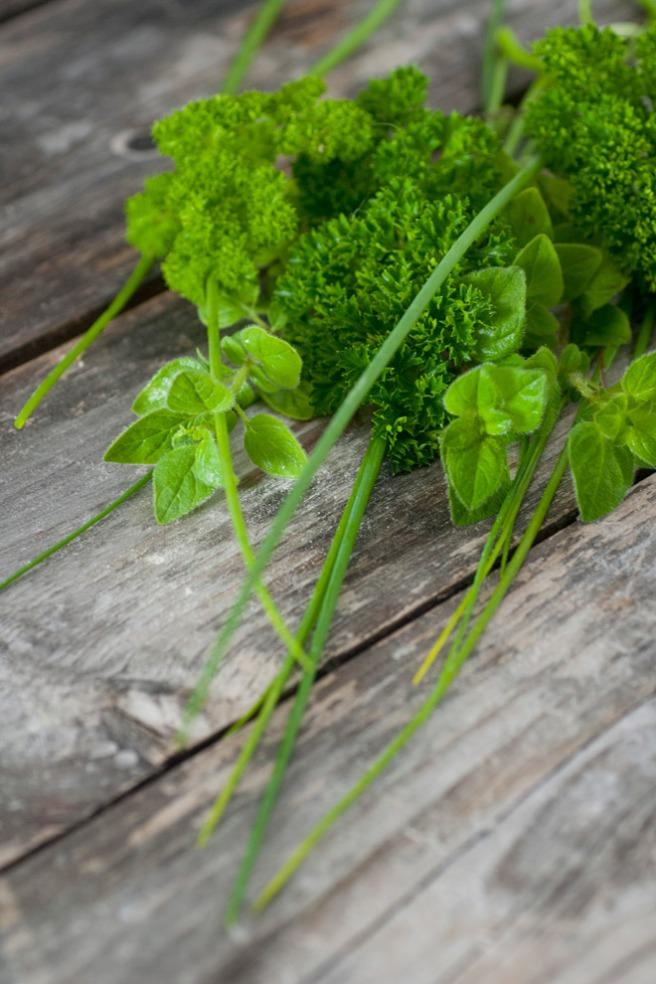 Oregano, persille og gressløk. © Foto: Lise von Krogh.