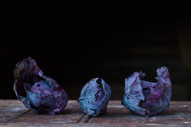 Fersk rødkål fra åkeren. Foto: Lise von Krogh.