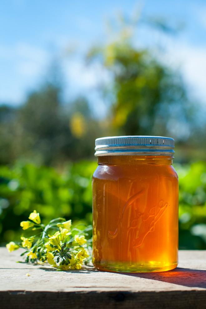 Min første honning. Foto: Lise von Krogh.