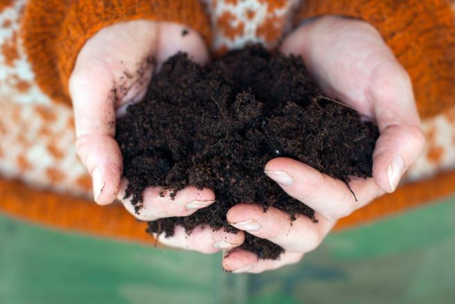 Jorden skal være løs og luftig. Luft er like viktig som vann og næring. Foto: Lise von Krogh ©